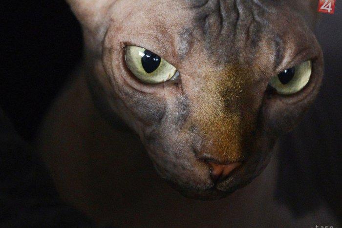 späť mačička obrázok